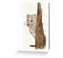 Pine Marten in pencil Greeting Card
