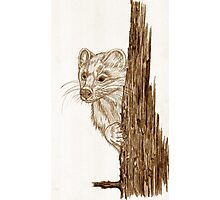 Pine Marten in pencil Photographic Print