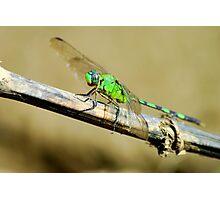 River Dragon - Brazil Photographic Print
