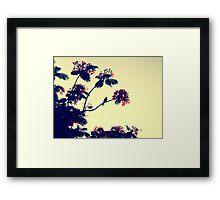 Bird heaven - St. Maarten Framed Print