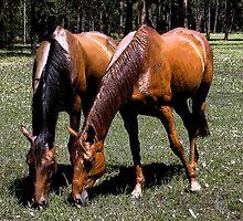 Happy Horses by rogbar101