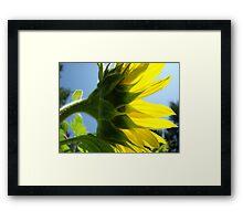 Sunlit Sunflower Flower art prints Yellow Sunflowers Floral Framed Print