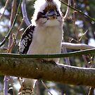 A Little Feathery Friend by Gabrielle  Lees