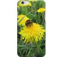Bumble bee on dandelion (2) iPhone Case/Skin