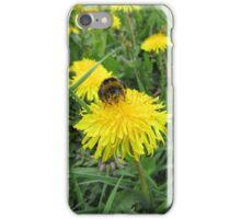 Bumble bee on dandelion (2) iPhone Case/Skin