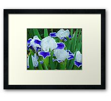 Iris Flowers Garden Purple White Irises Baslee Troutman Framed Print