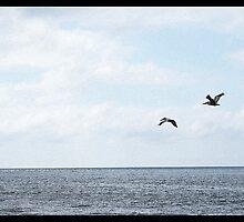 Albatross by korinna999