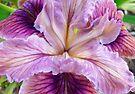 Purple White Iris Flower art prints Floral Baslee Troutman by BasleeArtPrints