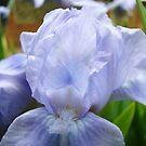 Pastel Blue Irises Flowers Garden art print Floral Baslee by BasleeArtPrints