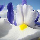 White Iris Flower Macro Close-up Blue Sky White Clouds by BasleeArtPrints