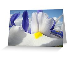 White Iris Flower Macro Close-up Blue Sky White Clouds Greeting Card