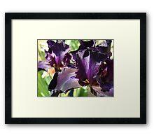 Best Selling Iris Flower Floral art prints Purple Irises Framed Print