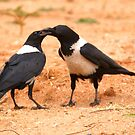 Sharing Is CAring by Graeme M