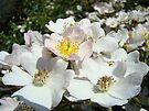 White Rose Flower Garden Summer art prints Floral by BasleeArtPrints