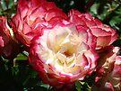 Beautiful Pink White Roses Flower Bouquet Garden art by BasleeArtPrints