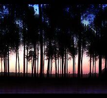 solitude de nuit by vampvamp