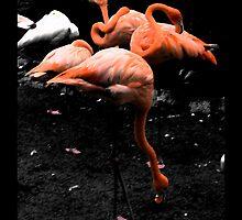 Flamingos by korinna999