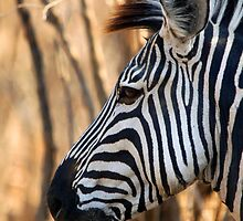 Animals of Africa by JenniferEllen