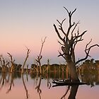 Gum Swamp at Forbes by Darren Stones