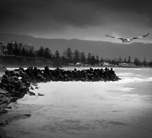 Wollongong Harbour Flyer by shireshark