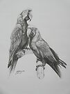 Macaws by yinyung