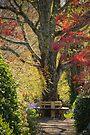 Seasons of Serenity by yolanda