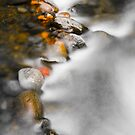 Golden Streambed by Zach Pezzillo
