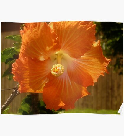 Sole Orange Poster