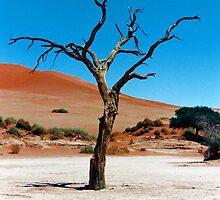 Sossusvlei Tree 1994 by Jennifer Sumpton