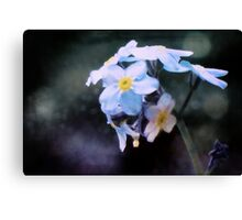 Summer: Forget-Me-Not Canvas Print