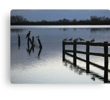 Evening roost Canvas Print
