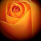 Anita...one of roses... by Rada
