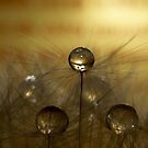 Chocolate Drops by Jenni77