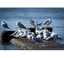 Birds of a Feather.... Photographic Print