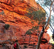 Kalbarri National Park.  Western Australia. by Alwyn Simple