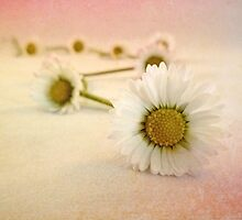 Daisy Chain by AllyNCoxon