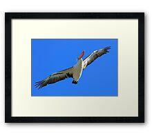 Pelican Airways Framed Print