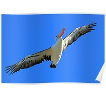 Pelican Airways Poster