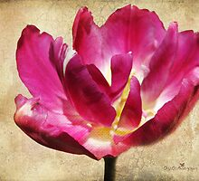 Textured Tulip by Olga