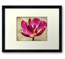 Textured Tulip Framed Print