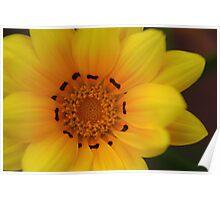 Bright Yellow Gazania Glower Poster