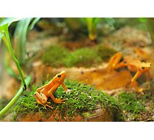 Day in the Life of a Dart Frog Photographic Print