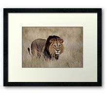 Mabua Male Lion Framed Print