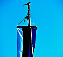 Swallow and the Flag Pole. by tutulele