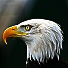 Eagle Eye by jim sloan