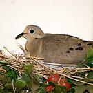 Mom nesting by Bonnie Pelton