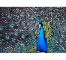 Mister Magnificent Photographic Print