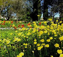 Wonderful World of Spring....Toowoomba ..Australia by sandysartstudio