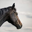 A horse portrait by Henri Ton