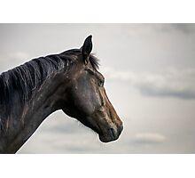 A horse portrait Photographic Print